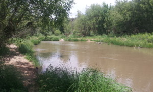 Verde River near my camp
