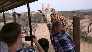 Donna feeding a giraffe