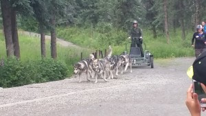 If they used more dogs on this cart the musher would end up in the bushes on the turn.